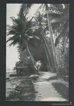 Islas Carolinas.Palao.Mision de Carolinas.Cocotales en la playa.Postal.Post-card. - Foto 1