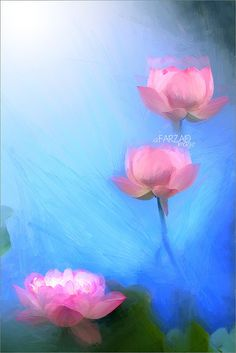 Lotus Flower - Image Based Oil Painting effect