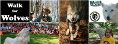 Free Family Event to Benefit Gray Wolves at Ward Pound Ridge Reservation, August 14th from 1pm to 3pm! #News #Charity #Wolves #Walk