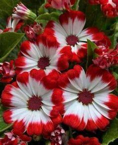 40 Perennial Flowers and Perennial Plants - Strange Flowers, Exotic Flowers, Flowers Nature, Amazing Flowers, Beautiful Roses, Beautiful Flowers, Flowers Perennials, Planting Flowers, Black Eyed Susan