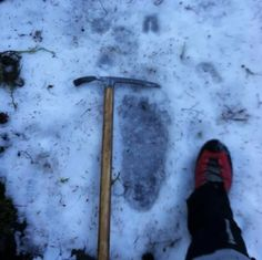 Sasquatch footprint found on Mount Rainier in November 2013. 15 to 16 inches long and 7 inches wide, with 5 clearly visible toe indentations. The fresh impressions were discovered just below the tree line in an area that is known for it's numerous Bigfoot sightings