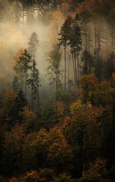 Ghostly Memories - Evolving mist through autumn forest , revealing the special…