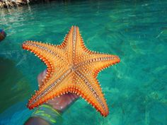 Beautiful starfish. Only at Puerto Rico