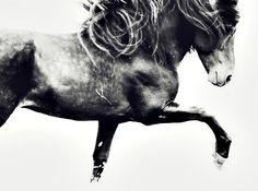 mirabilia-provocateur:  | Provocateur's Equus Collection |
