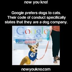 Google - Fact Google Facts, Code Of Conduct, All Gods Creatures, Weird Facts, Life Hacks, Sad, Cool Stuff, Funny, Animals