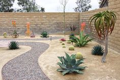 Dana Point, CA - Xeroscape Garden tropical exterior