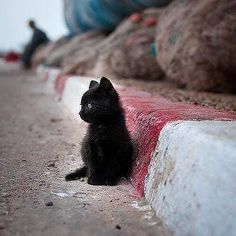 Cute Kittens, Cats And Kittens, Kittens Meowing, Kittens Cutest Baby, Newborn Kittens, Fluffy Kittens, Foster Kittens, Kittens Playing, Ragdoll Cats