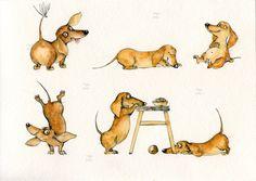 Inga SmG doxie Инга Измайлова такса йога скетч наброски собака Dog Restaurant, Weenie Dogs, Doggies, Short Dog, Dachshund Art, Dibujos Cute, Scottish Terrier, Watercolor Animals, Dog Art