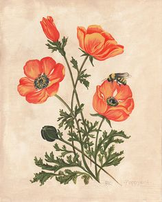 Vintage inspired California Poppy and honey bee painted in acrylic on card…