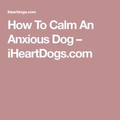 How To Calm An Anxious Dog – iHeartDogs.com