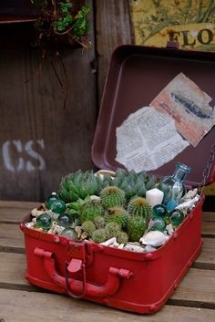How cute! Garden in a box!  Its the choices of added glass, shells and bottles that make me like this so much, not to mention the red box is a fun pop of color