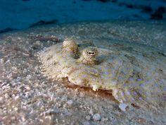 Flounder. Not like Disney.