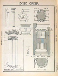 Architectural Drawings Ionic Order 1904 by William R. Ware