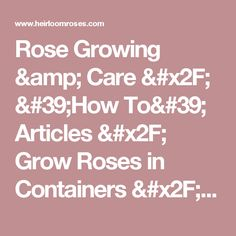 Rose Growing & Care / 'How To' Articles / Grow Roses in Containers / Grow Roses in Containers / Heirloom Roses - Heirloom Roses