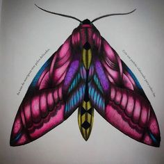 1000 Images About Millie Marotta Mariposas On
