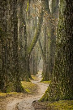 The Path by Kirsten Karius | Content in a Cottage