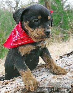 Adoptable Mixed Breed Puppies
