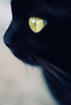 A close-up photo of a black cat's profile.