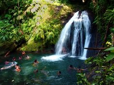 La Guadeloupe regorge de merveilles ; les cascades et les rivières en font partie. Vous les trouverez principalement à Basse-Terre.