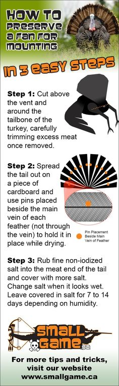 How To Preserve  A Turkey Fan For Mounting @Patty Markison Hall. Can also do this with pheasant tails also.