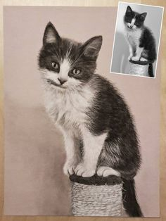 "Dessin aux pastels secs du petit chaton ""Swell"" :) Avec seulement 2 crayons : 1 noir et 1 blanc ! #pastel #draw #kitty #dessin #chat Crayons, Pastels, Cats, Animals, Pastel Drawing, Little Kitty, White People, Paint, Gatos"