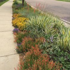 Hot Planting Palette for Hellstrip Garden  - Best Sidewalk Garden Ideas - Sunset Mobile