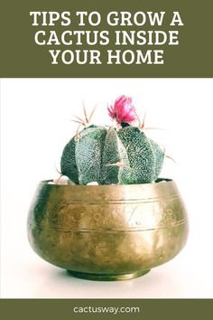 How Can You Grow Cactus – A Plant Adapted For The Desert Indoors? The biggest motivator for growing cacti should be because they are easy to maintain as they don't require a lot of work. Succulents will mostly die during the winter due to too much water. Therefore, there is a need to keep them indoors and without water often. #cactuscare #cactuscaretips #cactustips #cactuscareforbeginners #cactus #desertplants Desert Flowers, Desert Plants, Cactus Facts, How To Grow Cactus, Cactus Care, Gardening Tips, Indoor Gardening, Indoor Cactus, Yard Care