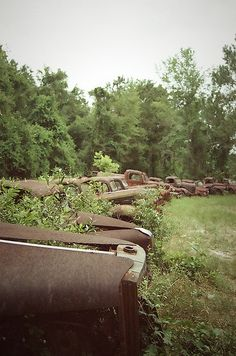 Abandoned Trucks - Crawfordville, FL - 35mm by bglasgow, via Flickr