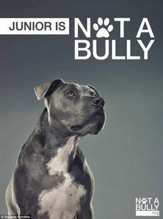 Junior and I are honored to be a part of our friend @douglassonders #NotABully campaign. cesar.mn/sJkb <3