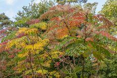Herfstkleuren Amersfoort