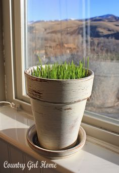 how to grow green wheat grass