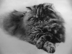 Paul Lung. Pencil Drawings