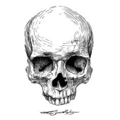 Crânio novo. #ilustracao #illustration #digitalart #bw #Calavera #caveira #cranio #skull #skulltattoo #tattoo #ink #darkarts #darkartists #mementomori