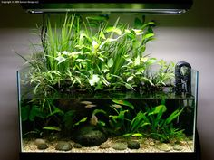 Emergent aquascape