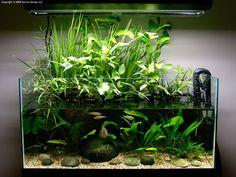Emergent aquascape