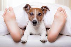 ¿Quieres salir con alguien que tiene un gato o un perro? #animalesdomesticos #citas