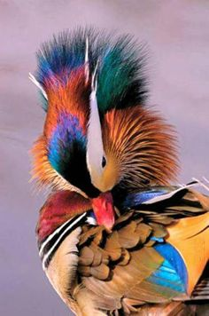 Most Beautiful Pages: Top 10 Rare Colorful Birds Around the World.