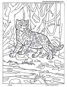 0d83c3fbf8180fe146e1a905dab83d57 animal coloring pages coloring pages for kids