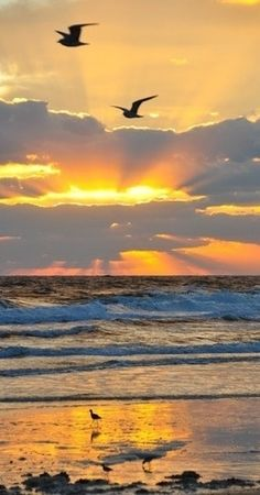 Sunrise in Florida • photo: Paul Bates