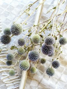Dried Blue Globe Thistle, Long Stem, Echinops, Green, Purple, Boutonniere Flower, Flowers, Bouquets, Wedding, Floral, DIY, Ball Decor