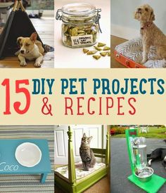 DIY And Crafts: 15 DIY Pet Projects & Recipes | Treats, bowls, beds, and accessories for your pets