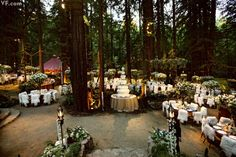 Three hundred sixty-four guests at fairy tail Big Sur wedding