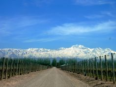 Mendoza: Land of the sun and good wine!!!  One of the Wine International Capitals!