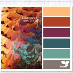 Feather spectrum color pallet (colors I like with the purple and gray)