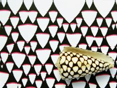 Cellular Automata Rule #30 predicts the pattern on this species of Conus shell.