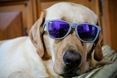10 Fun Ways to Get Your Dog Ready For Summer: Ah, Summer . . . blissfully long days, barbecues with friends, and countless adventures for you and your dog (plus maybe a dropped sausage or two — score).