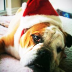 Happy Holidays! #BulldogPride @Ferris State University