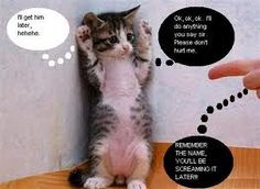 funny animals so cute and funny!!