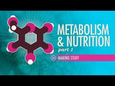 Metabolism & Nutrition, Part Crash Course A&P Video Description Metabolism is a complex process that has a lot more going on than personal Health And Nutrition, Health And Wellness, Nutrition Guide, Champion, Science Videos, Workout Music, Lymphatic System, Metabolic Diet, Body Systems