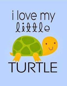 Types of Tortoise for Pets – Find Your Favorite Cute Turtles, Baby Turtles, Sea Turtles, Turtle Quotes, Tortoise Turtle, Tortoise Care, Kawaii Turtle, Tortoise Enclosure, Sulcata Tortoise